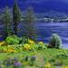 Flower Power - Frühling im Westen Kanadas by Reinhard.Pantke