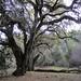 Rancho-San-Antonio-2012-01-14