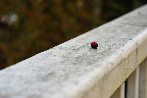 Manually Focused Berry