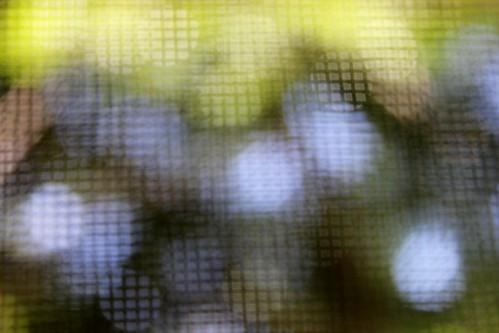 3 - blurred