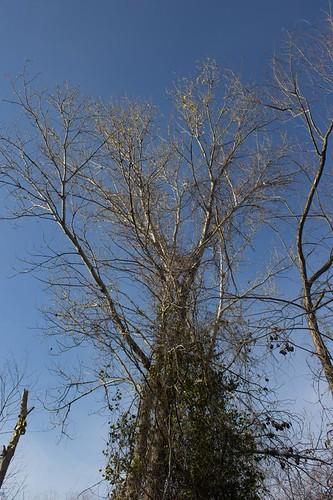 Tree Reach