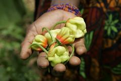 Senegalese Woman Tends to Vegetable Garden
