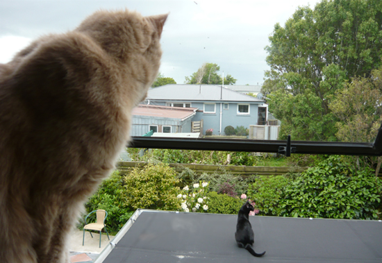 The wild cat(s) of Invercargill