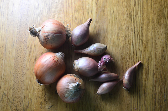 onions + shallots