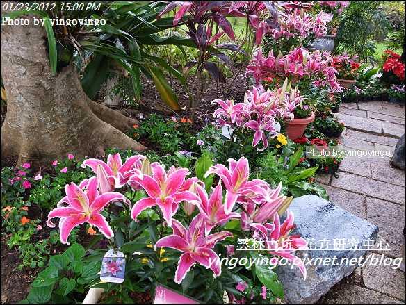 雲林古坑_花卉研究中心20120123_R0050653