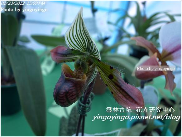 雲林古坑_花卉研究中心20120123_R0050674