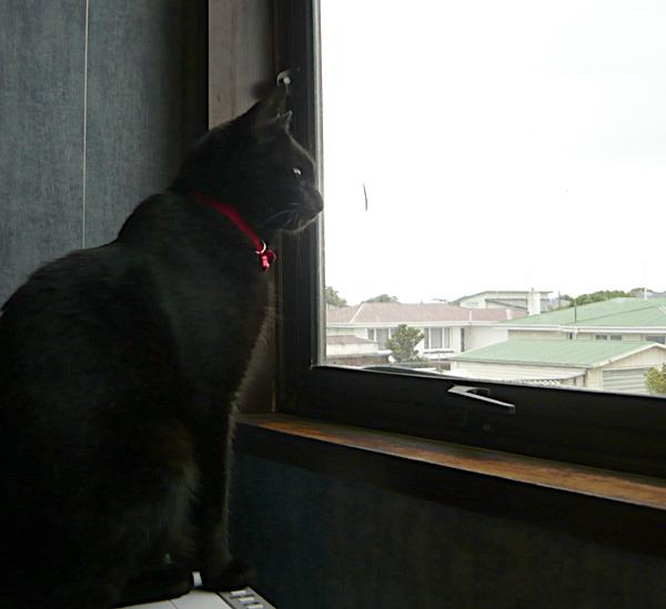 norman-window
