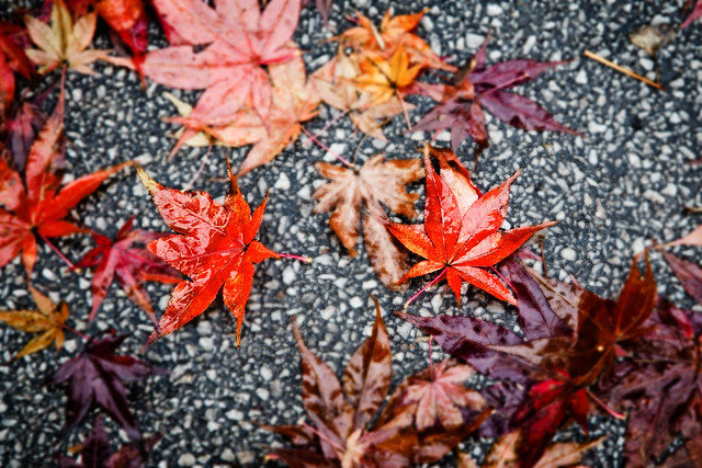 Seoul Leaves [EOS 5DMK2 | EF 24-105L@05mm | 1/40s | f/7.1 |  ISO400]