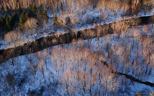 trees sunrise river novascotia aerial fromabove aerialphoto sunlit winterscene interval nspp antigonishcounty