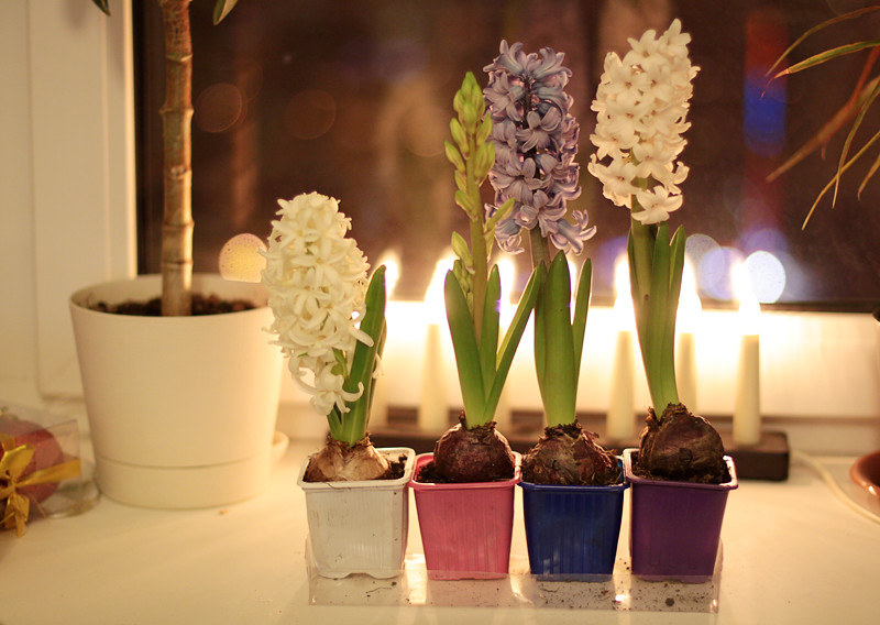 hyacinth 4.02