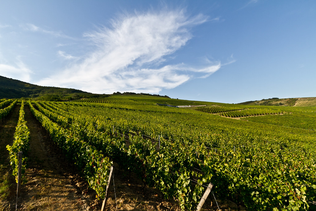 Tokaji vineyards