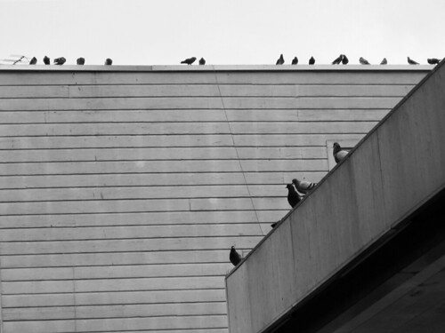 Pigeons and Building Rooftops