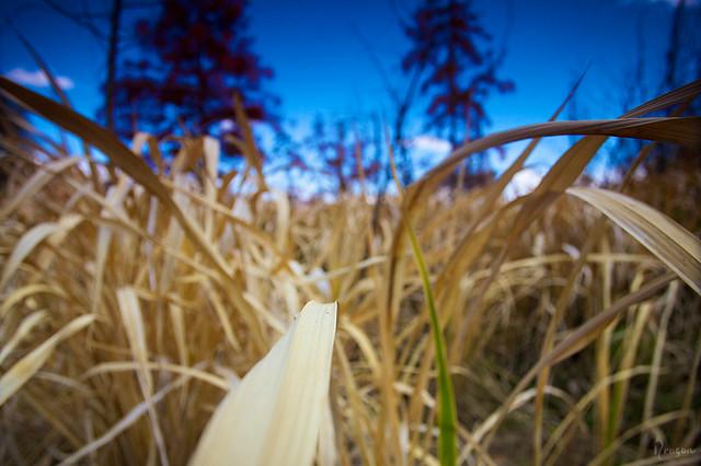 Grass / 洱海湖畔的草丛