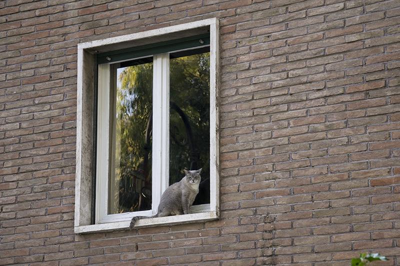 Rome Roman Cat