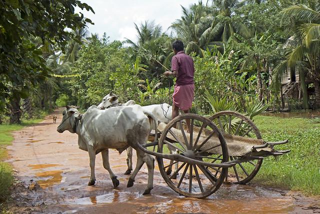 Lokal farmer i Kampong Thom