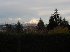 Mount Hood from the Rose Garden