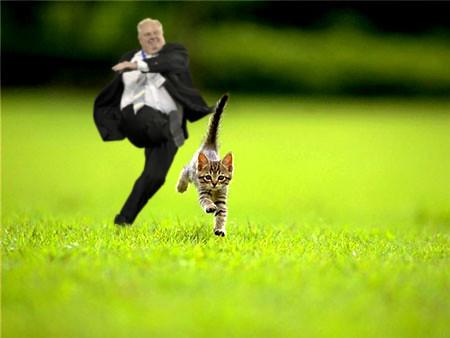 ford-kitten
