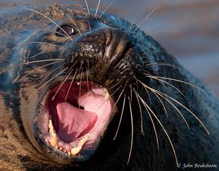 Not so happy seal