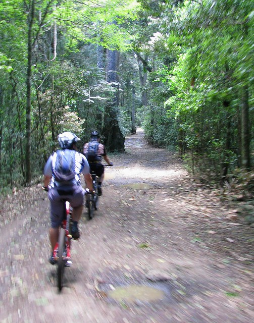 Rainforest Ride