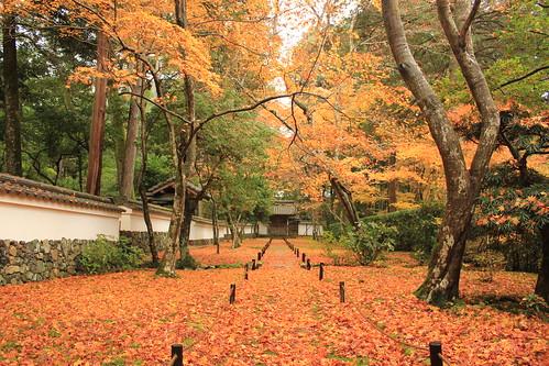 京都 西芳寺(苔寺): Kyoto Saihou-ji temple