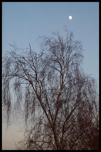 [49/52] Moon & Birch