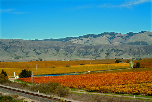 fall vineyard hills
