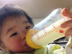 今日の片手哺乳瓶飲みとらちゃん(2011/12/13)