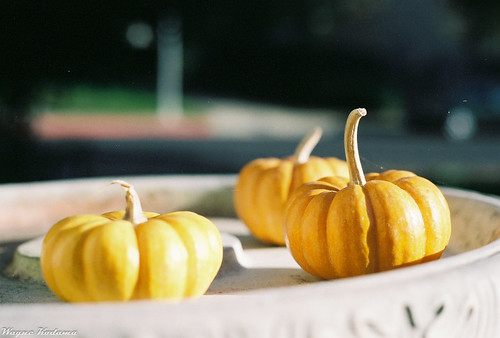 Pumpkins on Film