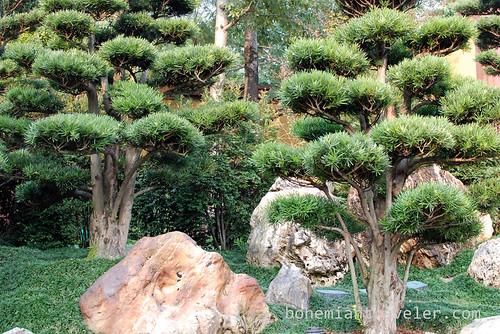 Buddhist Pines