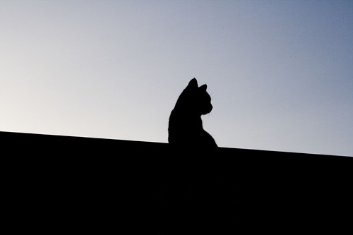 shadow cat on the roof