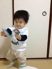 妻撮影。AKB48カードを気に入るとらちゃん (2011/12/22)