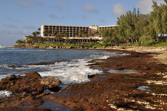 Turtle Bay Resort Beach Pictures