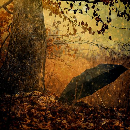 [フリー画像素材] 自然風景, 樹木, 傘 ID:201201020600