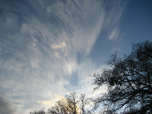 Epping Forest skies