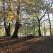 Small photo of Autumn Bolam Lake