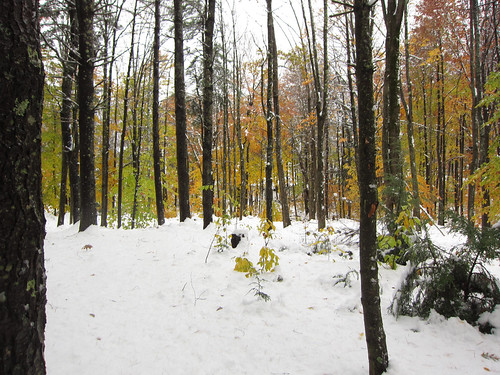 fall leaves and wet snow