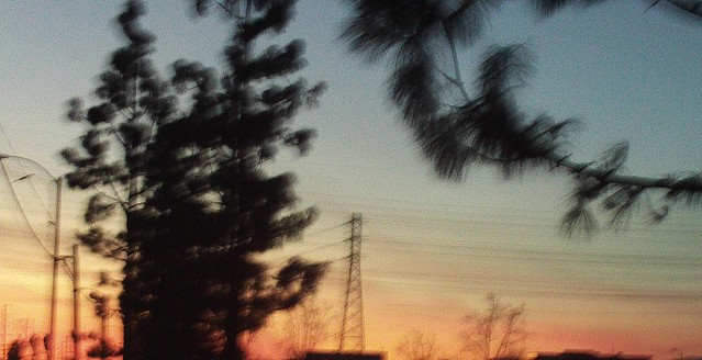 Pink And Pine Tree Silhouettes
