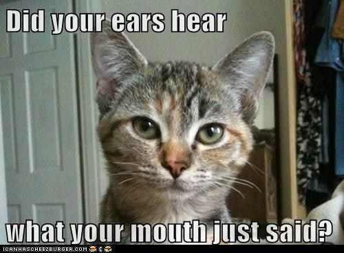 Did your ears hear