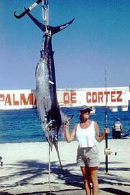 palmes de cortez sailfish