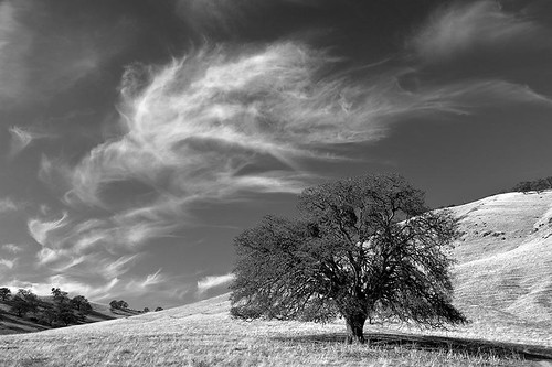 Round Valley Oak and Clouds