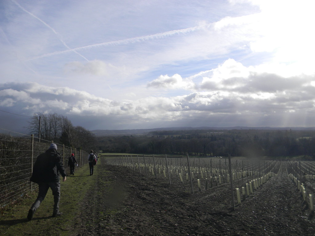 Vineyard view Wanborough to Godalming