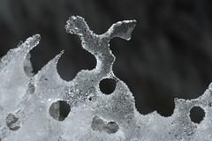 ice-elegance