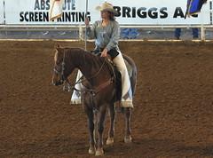 english riding(0.0), dressage(0.0), animal training(0.0), charreada(0.0), animal sports(1.0), rodeo(1.0), equestrianism(1.0), western riding(1.0), mare(1.0), stallion(1.0), equestrian sport(1.0), sports(1.0), western pleasure(1.0), reining(1.0),