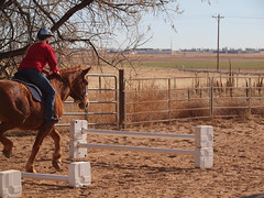 K and Calliope, Jumping exercise
