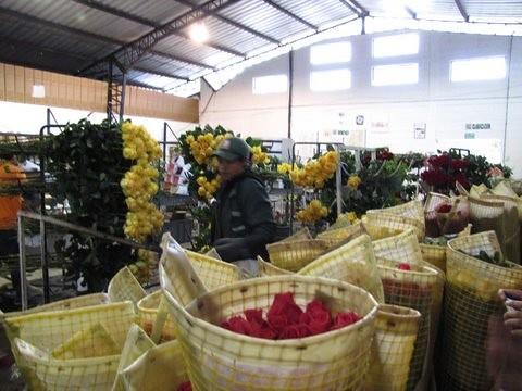 Ecuador-roses-images