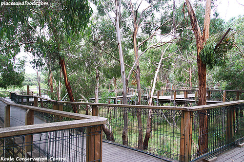 koala conservation centre5