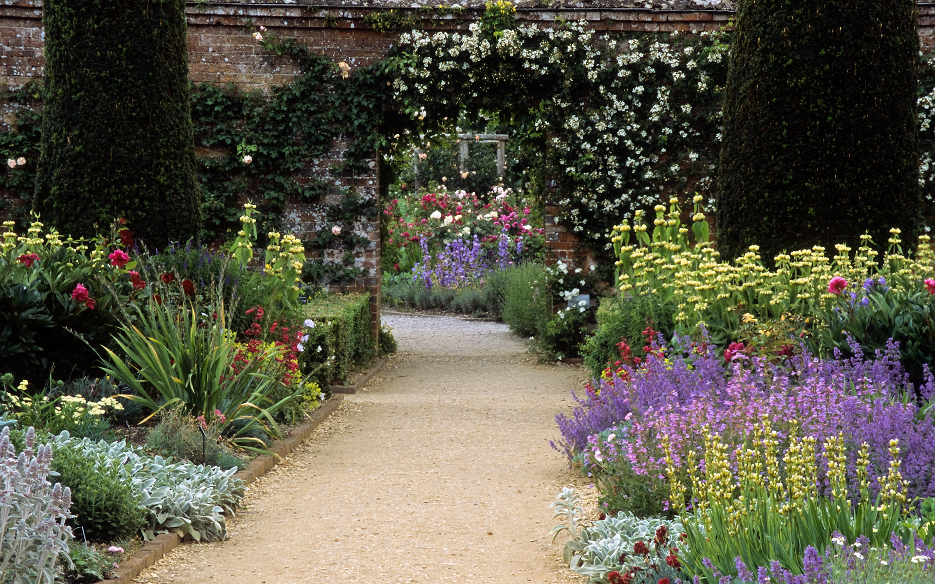 Roses In Garden: Mottisfont Abbey Gardens, Hampshire, England