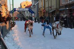 The reindeer sprint race