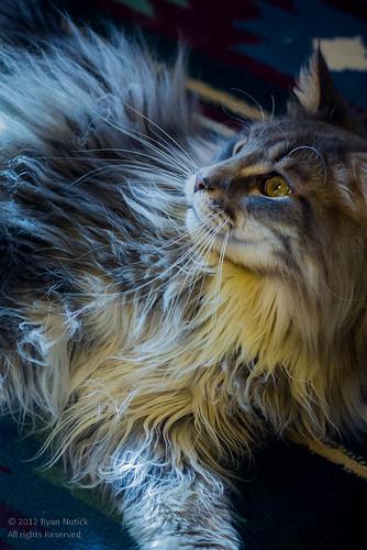 Thomas by tanuki_green