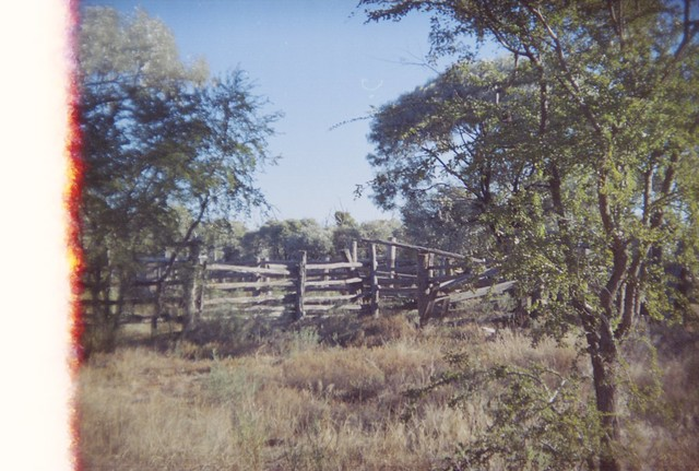 Fence, bush, and trees